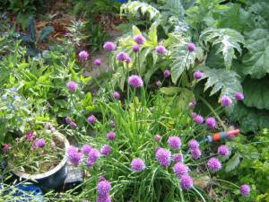 Chives gone mad